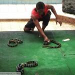 Thai Snake Handlers