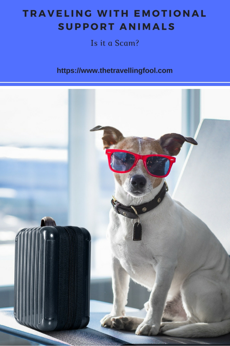 traveling with emotional support animals
