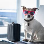 Traveling With Emotional Support Animals, Is It A Scam?