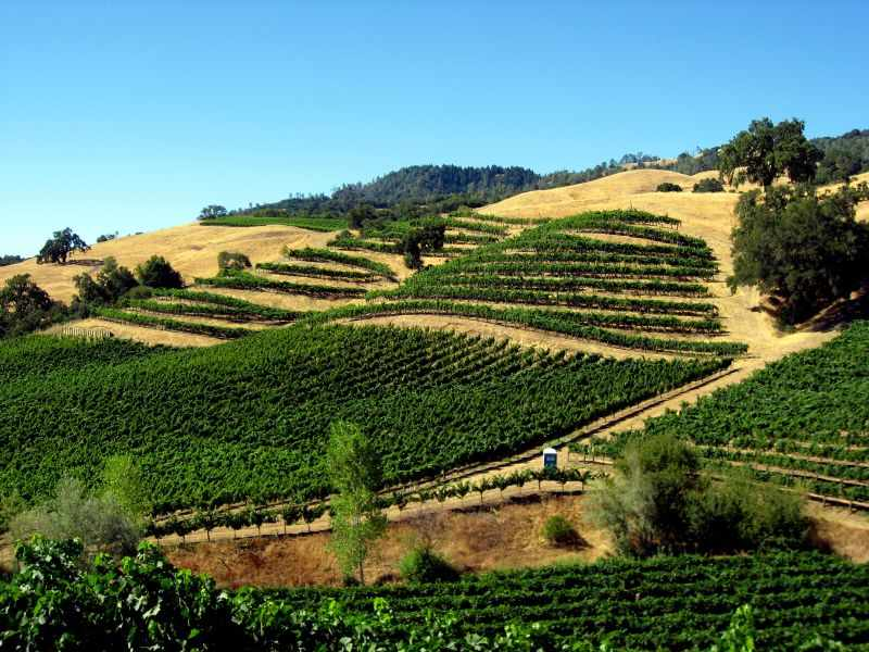 Unusual Stops in California's Alexander Valley