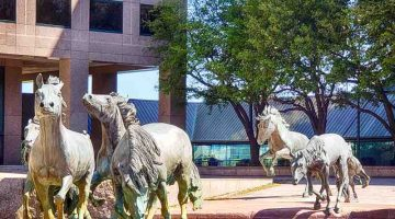 Mustangs at Las Colinas