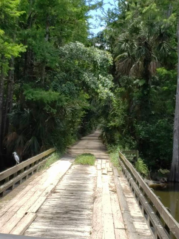 Swamp Bridge
